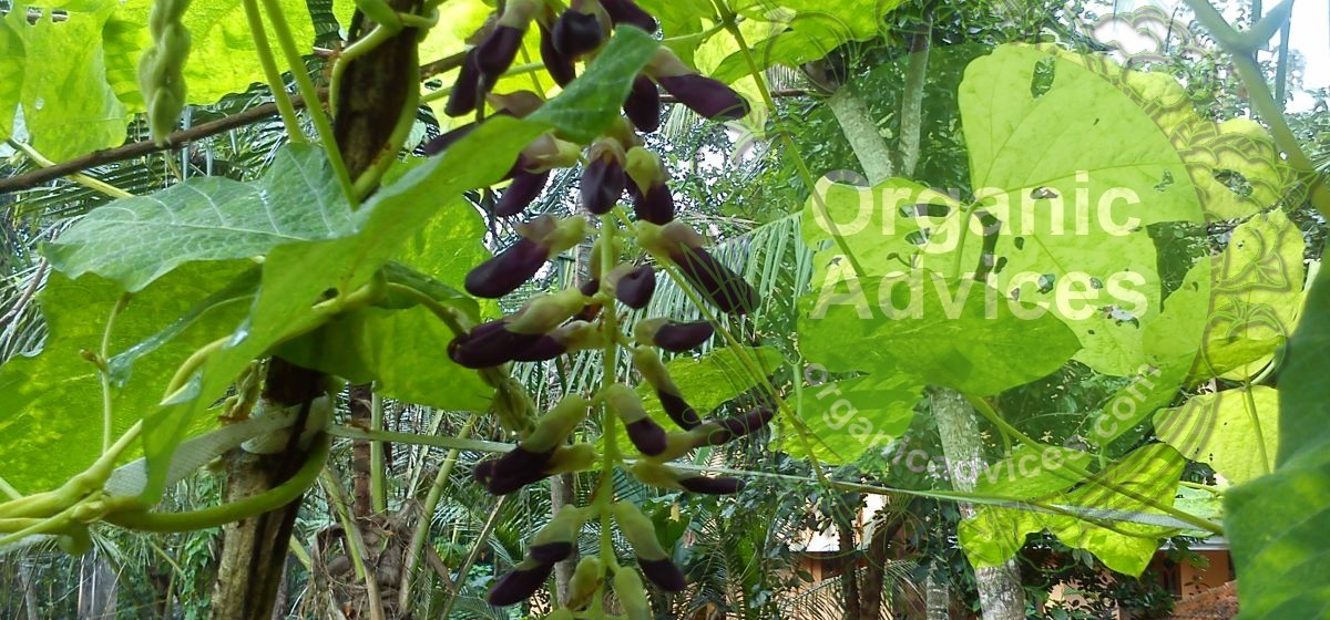 advantages of organic farming over others