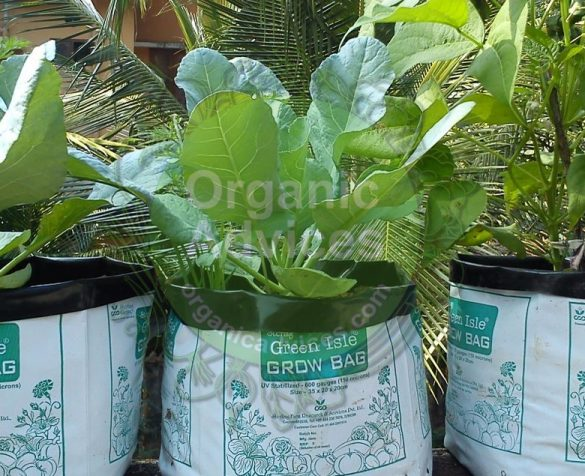 grow bag online purchase options