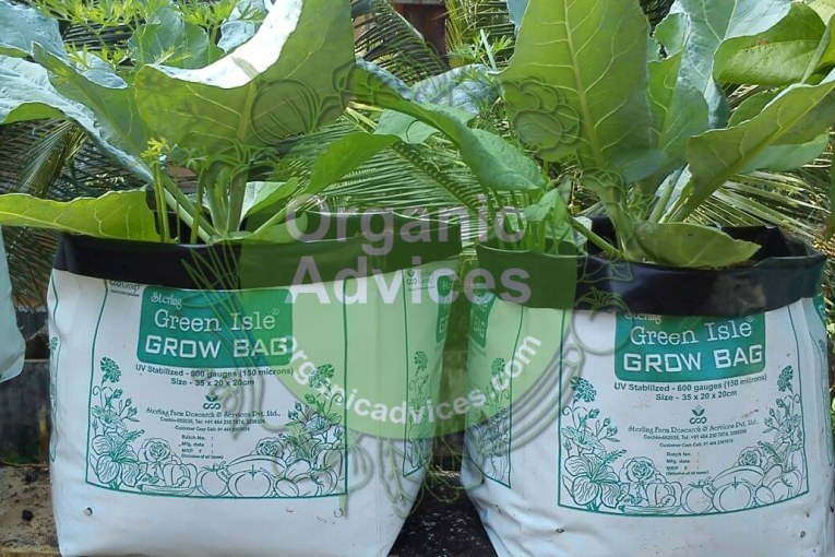 grow bag online purchase options price and other details
