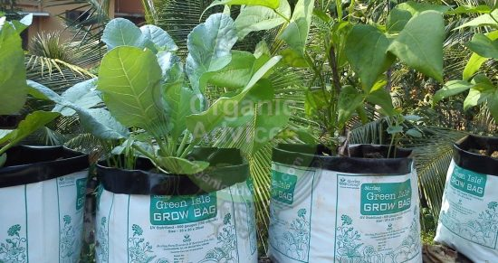 filling grow bags procedure
