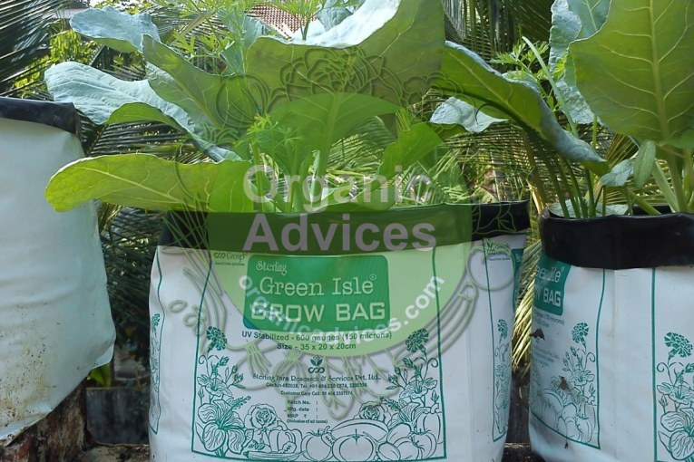 filling grow bags for organic farming – step by step methods