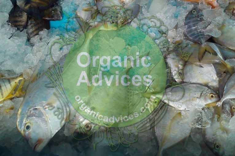 fish amino acid usage – economical organic fertilizer with fish and jaggery